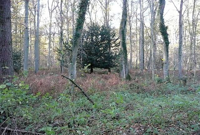 Hay Wood