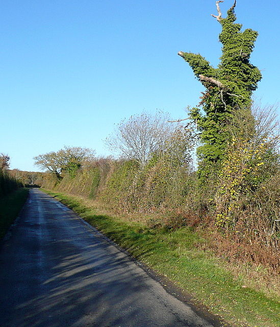 Tree on Summer Down Lane