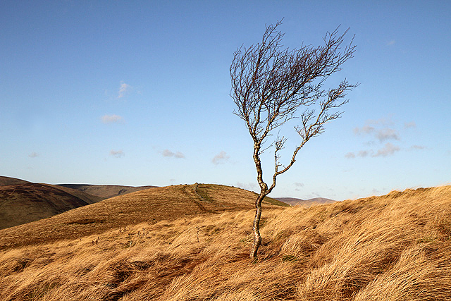 A small tree on Potholm Hill