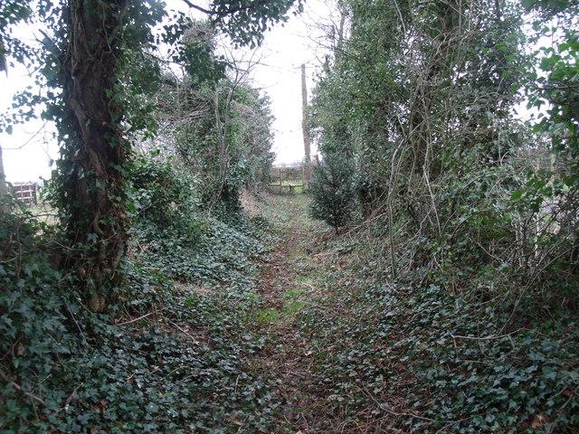 Public Foot path