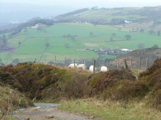 Sheep grazing alongside Scaly Gate