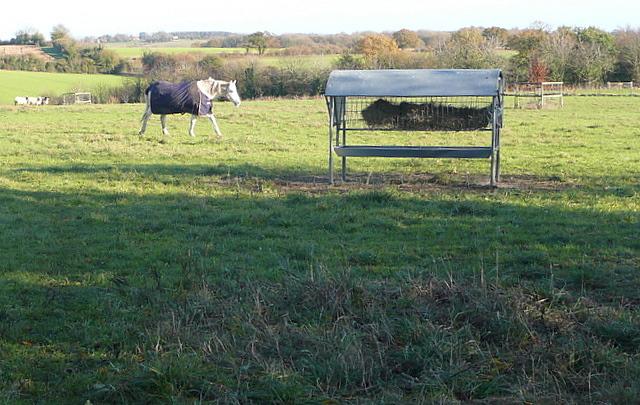 Paddock at Manor Farm