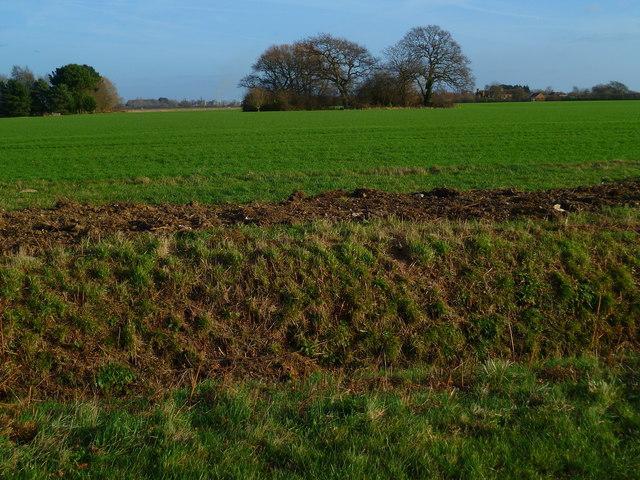 Field east of Park Lane