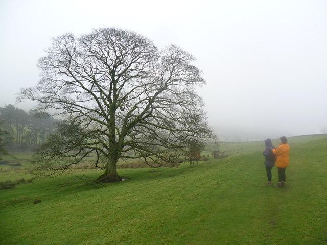 Hillside near Macclesfield Forest