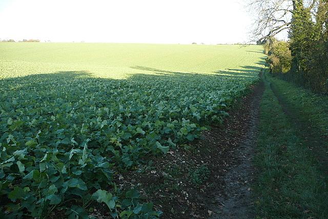 Footpath towards Hannington