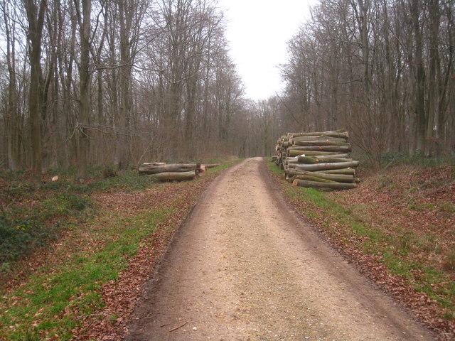 Logging in Black Wood
