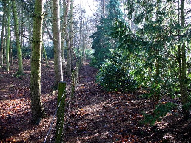 Oakhanger Moss