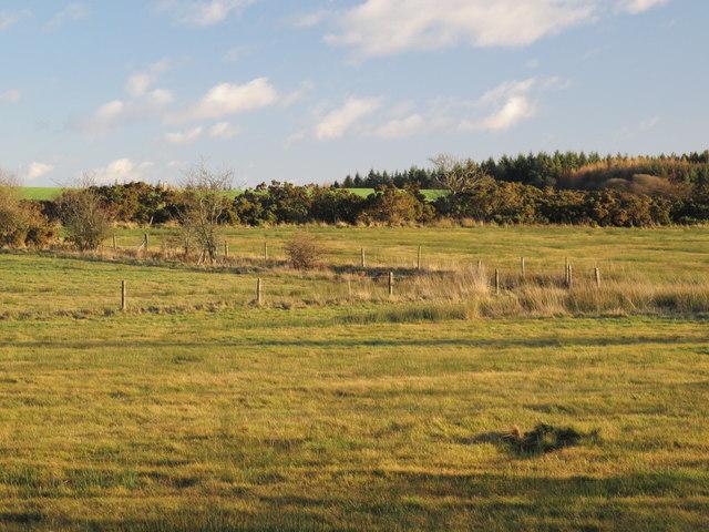 Farmland northeast of the Lead Road (2)