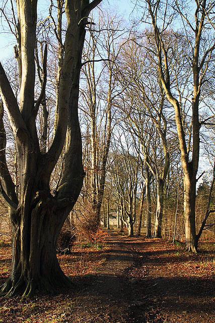 Natives Wood