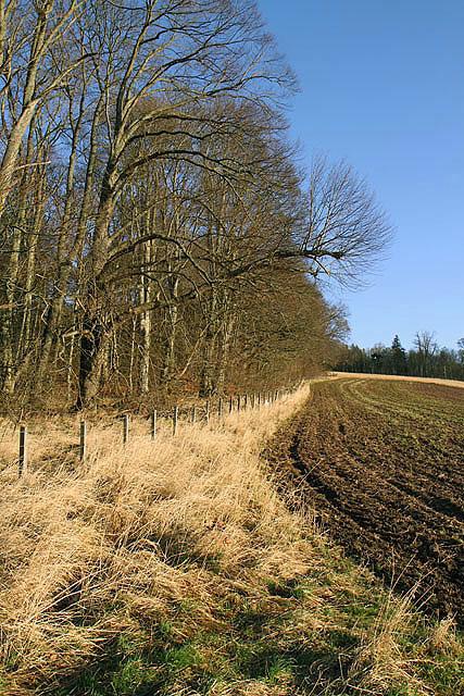 Farmland by Natives Wood