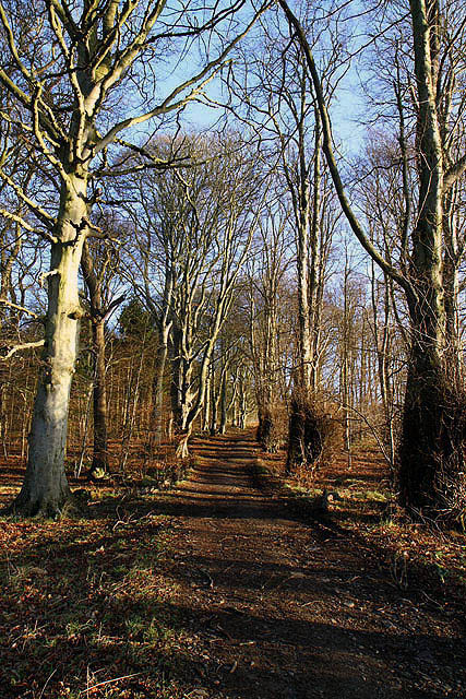 A path in Natives Wood