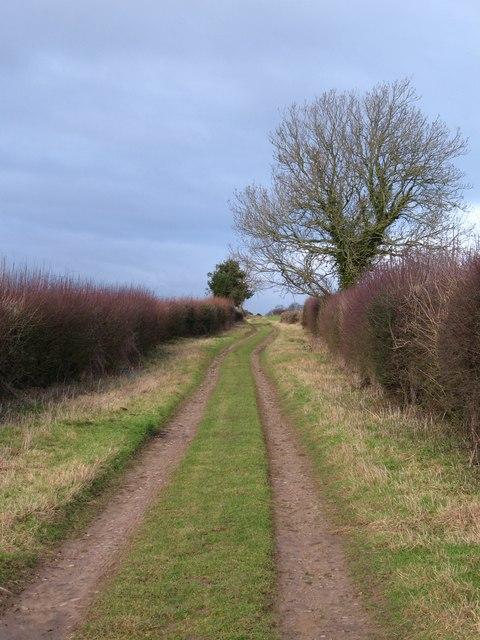 Green Lane near Holly Park