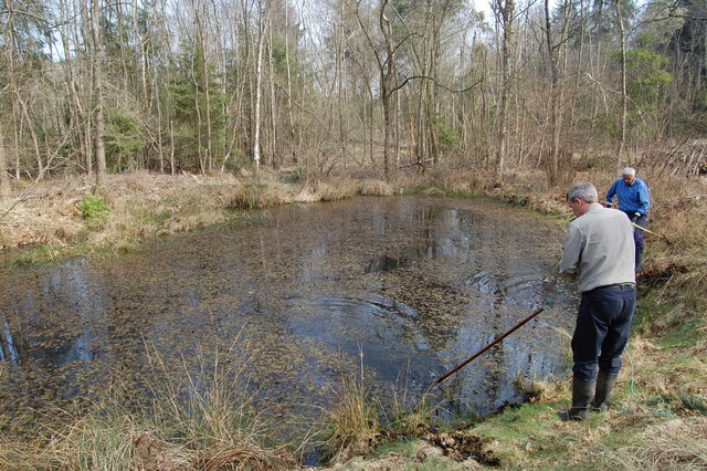 Pond clearing in Park Copse