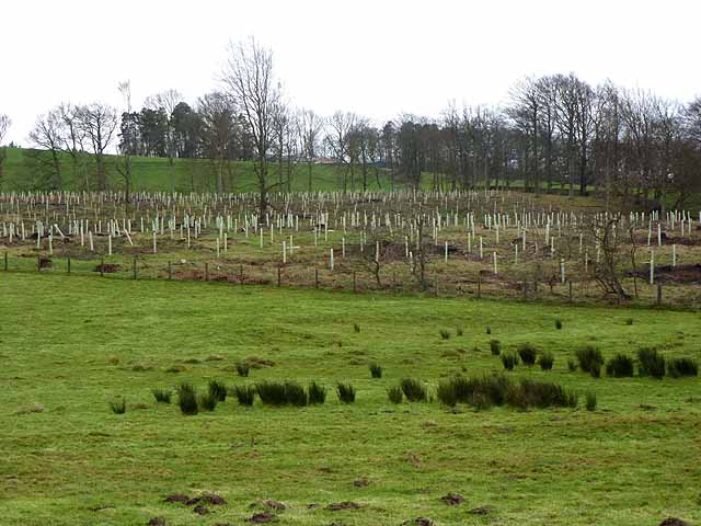 Rest Plantation