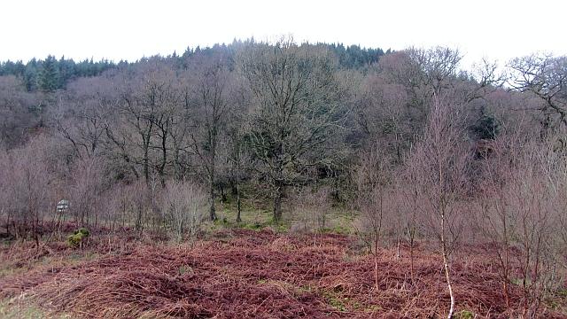 Cormonachan Wood