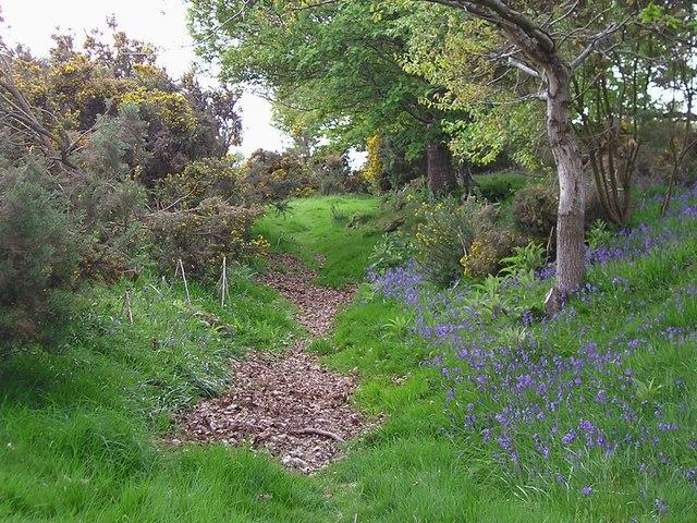 Bridleway, near Langridge Wood