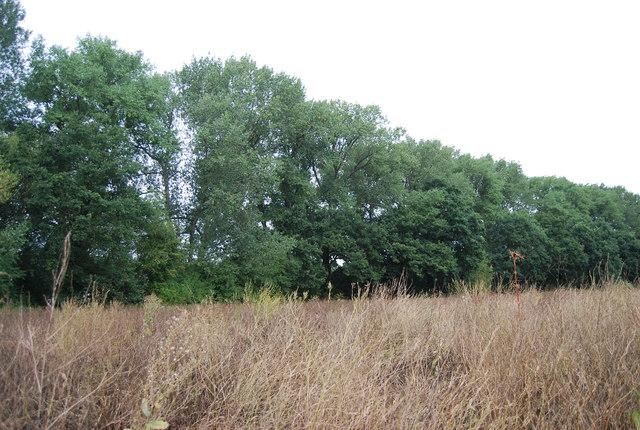 A belt of trees