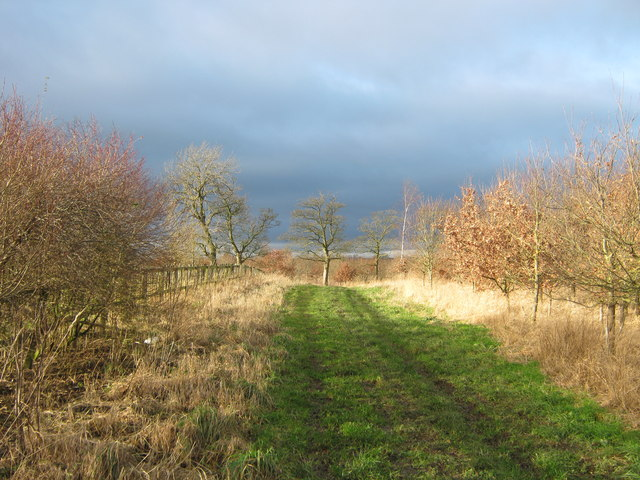 Ride through woodland north of Murton Blue House