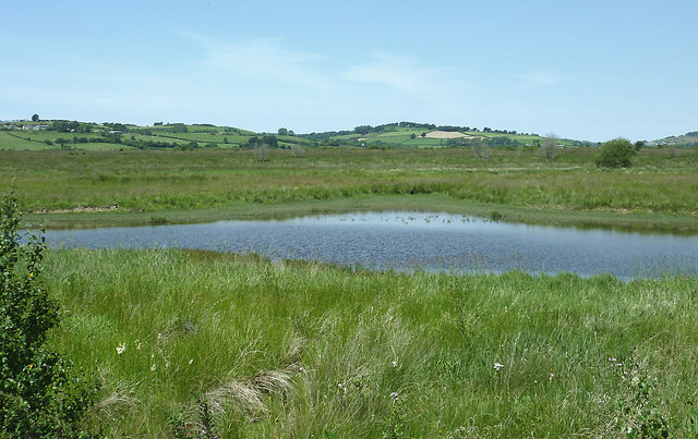Cors Caron - The Bog of Tregaron in July, Ceredigion