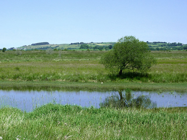 Backwater on Cors Caron in July, Ceredigion