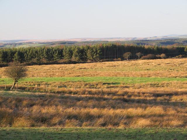 Farmland east of Healey Riggend (3)