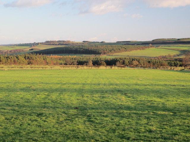Farmland west of Wheelbirks Woods