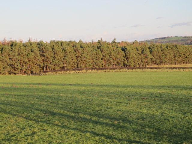 Farmland south of Fotherley Gill (2)