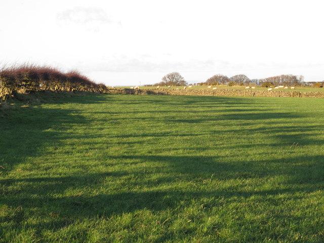 Farmland southwest of Low Fotherley