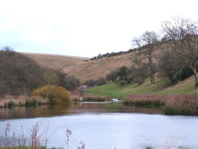 Pond in Millington Dale