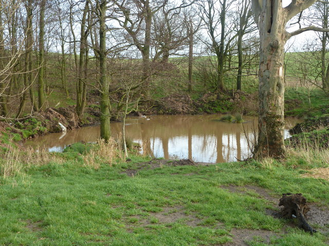 Pond in Holme Wood from footpath