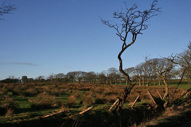 Fields near Leadloch