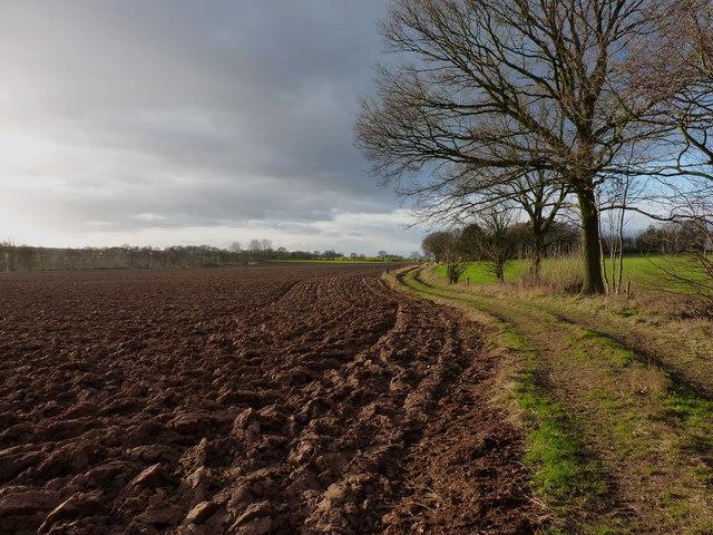 Along the track towards Ferndale Farm