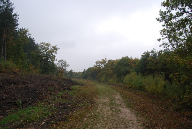 Track in Clowes Wood
