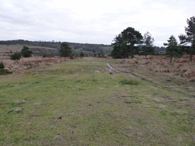 Track across heathland in Ashdown Forest