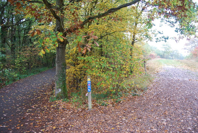 Cycle path and footpath junction, Clowes Wood