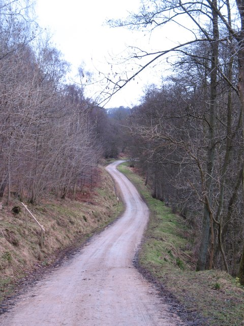 Forest track, Riccal Dale
