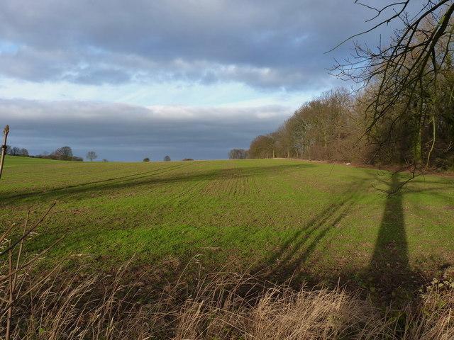 Farmland near Middle Wood