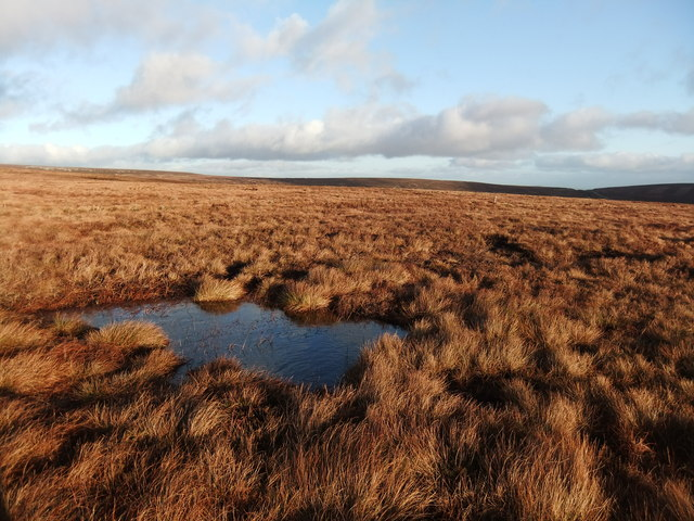 Wet moorland north of Close House
