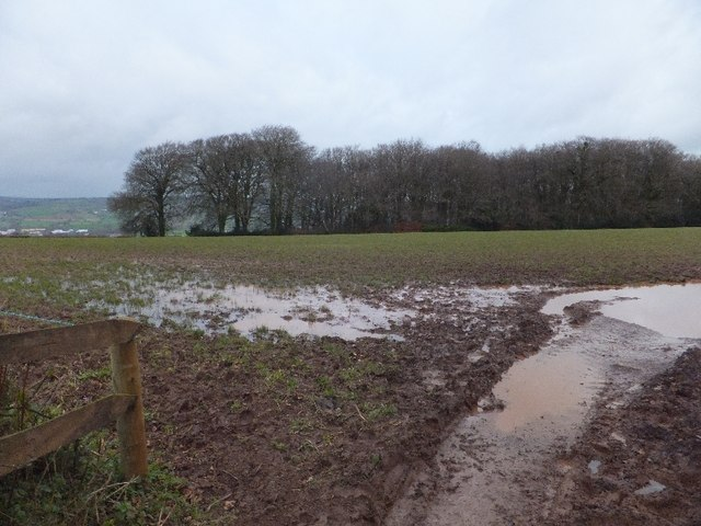 Muddy field and Warnicombe Plantation
