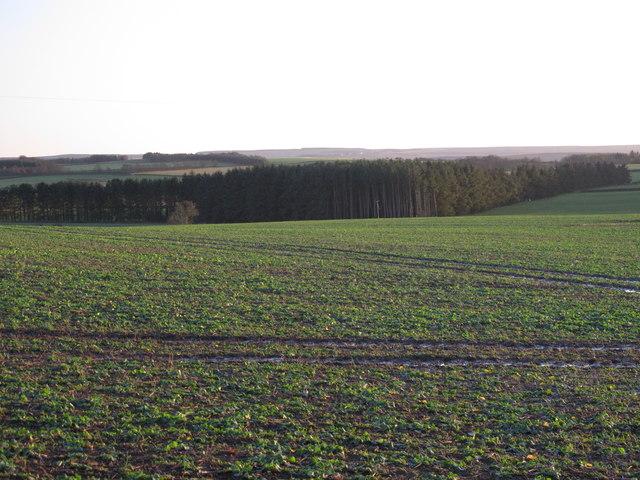 Farmland southwest of Kiln Pit Hill