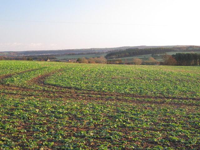 Farmland southwest of Kiln Pit Hill (2)