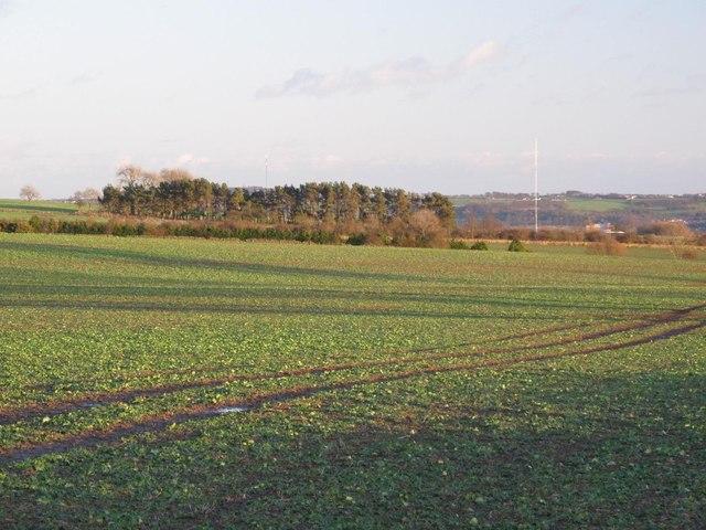 Farmland and woodland northwest of Unthank