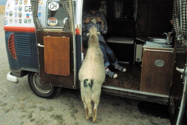 Horseshoe Pass - 1981