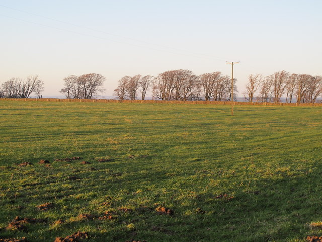 Farmland east of West Minsteracres (2)