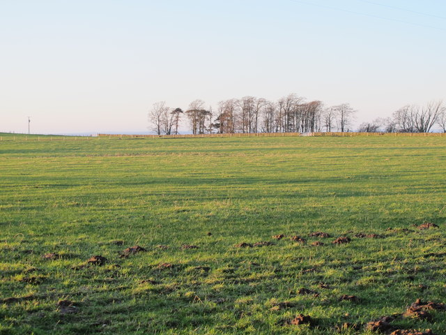 Farmland east of West Minsteracres (3)