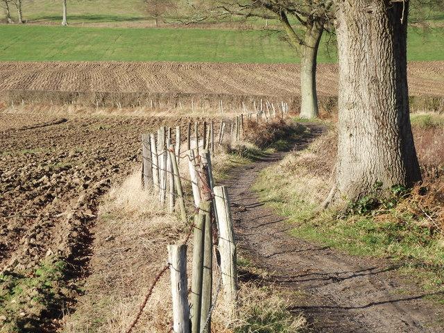 Bridleway by Pitt Lane