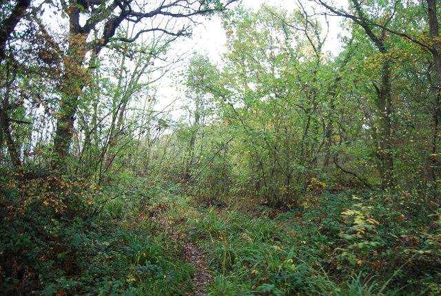 The last bit of Clowes Wood