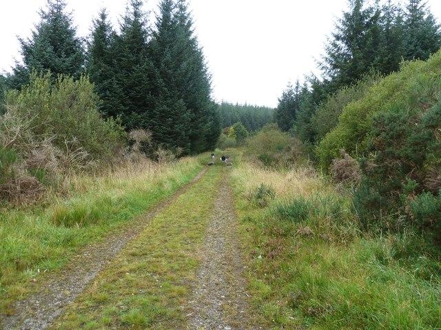 A forest track near Moneypool Burn