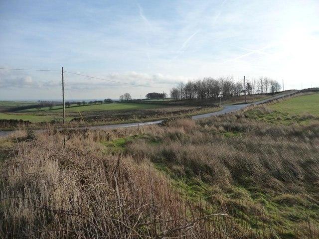 Rough grass alongside Blackwater Dike