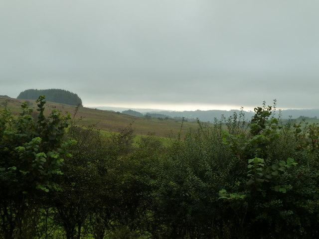 Looking through the rain towards Knocktinkle Wood